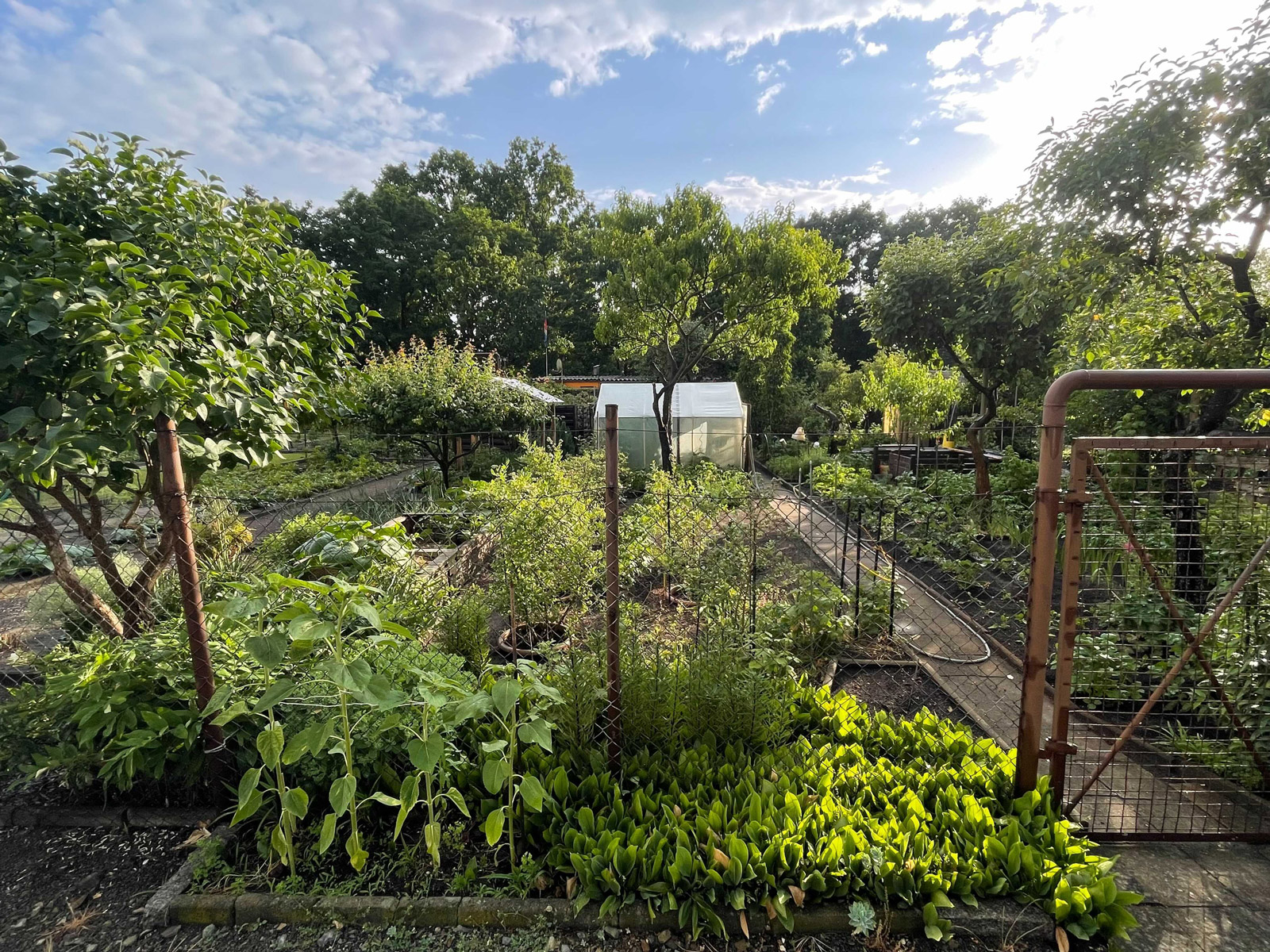 Allotment-Gardens_Full_Web